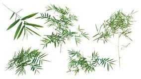 在与裁减路线的灰色背景隔绝的竹子 免版税库存图片