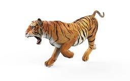 在与裁减路线的白色背景隔绝的Gal老虎 皇族释放例证