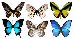 在与裁减路线的白色背景隔绝的套六只蝴蝶 免版税图库摄影