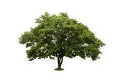 在与裁减路线的白色隔绝的绿色树 库存照片