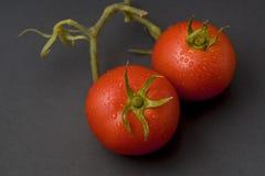 在与词根、叶子和wa的黑背景隔绝的两个蕃茄 免版税库存照片