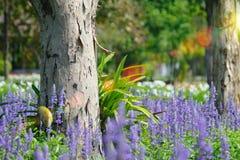在与选择聚焦的夏天期间淡紫色开花开花在领域 库存照片