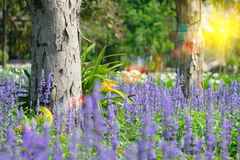 在与选择聚焦的夏天期间淡紫色开花开花在领域 免版税库存图片