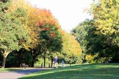 在与通过进来在一个农村设置的路的秋天停放 免版税库存图片