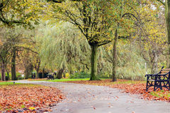 在与通过进来在一个农村设置的路的秋天停放 免版税图库摄影