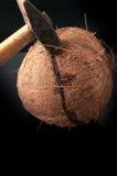在与锤子的一半打破的椰子 库存照片