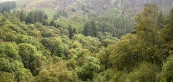 在与mou的夏天使豪华的绿色森林环境美化的全景图象 免版税库存图片