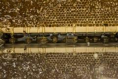 在与textspace的收获背景期间光滑的黄色金黄蜂蜜梳子反射镜子甜蜂蜜滴水流动 免版税图库摄影