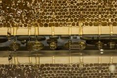 在与textspace的收获背景期间光滑的黄色金黄蜂蜜梳子反射镜子甜蜂蜜滴水流动 免版税库存照片