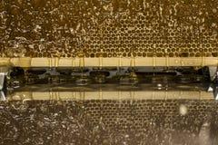 在与textspace的收获背景期间光滑的黄色金黄蜂蜜梳子反射镜子甜蜂蜜滴水流动 库存图片