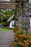 在丛林地带内格拉(Ecolodge),马塔加尔帕,尼加拉瓜的花 库存照片