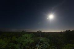 在丛林地带的Moonset 库存照片