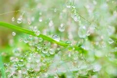 在丛的露滴在雨以后的草 雨季的湿气 背景的图象 库存图片