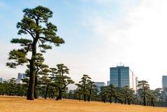 在东京中间的都市森林 库存照片