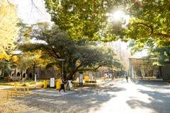 在东京大学的入口在大树和阳光叶子下 免版税库存图片