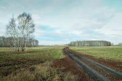 在东欧的领域的春天 库存照片