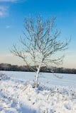 在东部Grinstead的冬天场面 库存图片