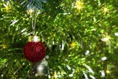 在丝带的一个圣诞节红色球在分支冷杉 图库摄影
