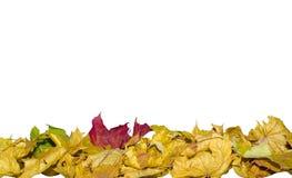 在丝毫的红色的秋叶,绿色,黄色,棕色和干燥叶子 免版税库存照片
