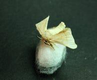在丝绸茧的蚕蛾 库存照片