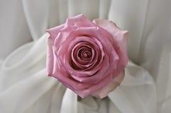 在丝绸的桃红色玫瑰 免版税图库摄影