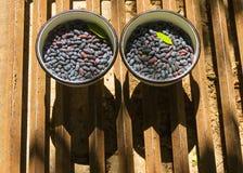 在两个白色杯子的忍冬属植物莓果 免版税库存图片