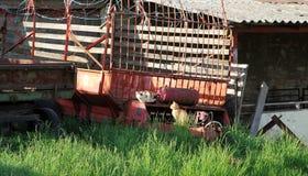 在两只猫的看法坐在一个农村场面的老拖车在白天之前 免版税库存图片