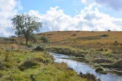 在两座桥梁附近的西部箭河,达特穆尔国立公园,德文郡,英国 免版税图库摄影
