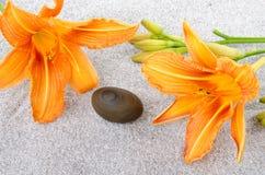 在两朵橙色百合花之间的小卵石石头在灰色沙子 图库摄影