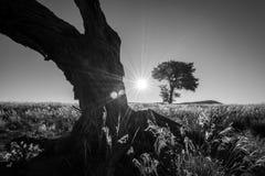 在两棵树之间的太阳设置 图库摄影