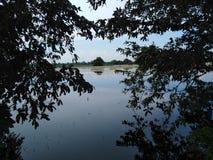 在两棵树黑暗的水之间的水 免版税库存照片
