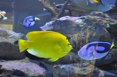 在两海洋水族馆的五颜六色的鱼 免版税库存图片