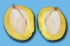 在两的新,成熟芒果裁减 果子在蓝色背景被隔绝 概念:健康食品 免版税库存图片