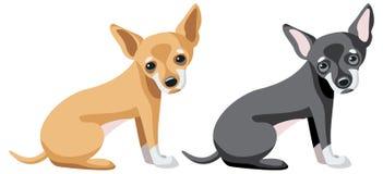 在两种不同颜色的奇瓦瓦狗狗 免版税库存图片