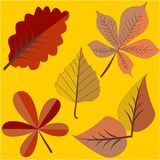 在两种颜色的秋叶 免版税库存照片