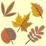在两种颜色的秋叶 免版税库存图片