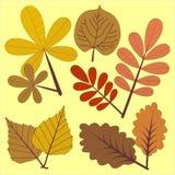 在两种颜色的秋叶 库存照片