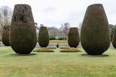 在两行的许多梨状的针叶树 免版税库存照片