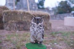 在中世纪节日的Oehoe猫头鹰 免版税库存图片