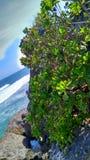 在中午时间的多岩石的海滩,位于日惹印度尼西亚 免版税库存图片