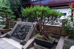 在中国庭院的美丽的盆景树 免版税库存图片