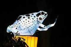 在中国轻的节日的发光的青蛙时装模特 库存照片