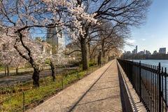 在中央公园和鞋帮东边的春天 纽约 免版税库存照片
