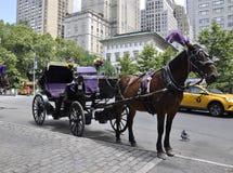 在中央公园的马支架在从纽约的曼哈顿中城在美国 免版税库存图片