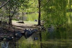 在中央公园11的水池 免版税库存图片