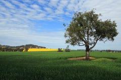 在中央西部NSW的收获领域 免版税图库摄影