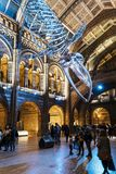 在中央霍尔,自然历史博物馆的巨大的恐龙骨 图库摄影