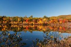 在中的一个湖与明亮的五颜六色的秋天树 晴朗的日 阿科底亚国家公园 美国 缅因 库存图片