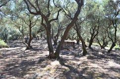 在中间天太阳的树 免版税库存图片