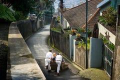 在丰沙尔沥青街道上的藤茎爬犁下坡乘驾  免版税库存图片